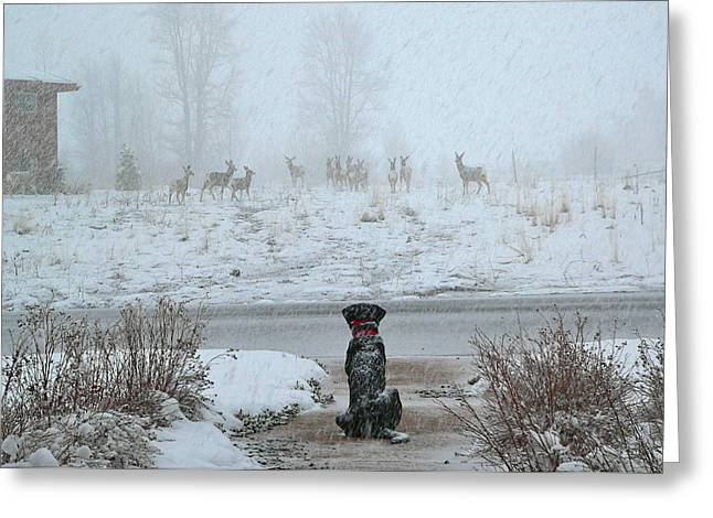 Murphy Watches The Deer Greeting Card by Eric Tressler