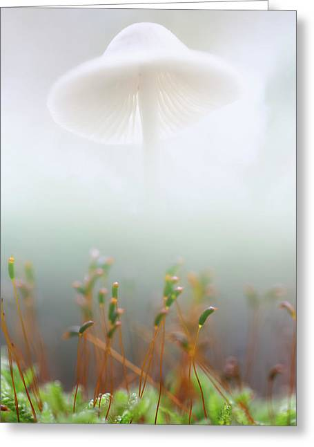 Mushroom Dreams, Mycena Galericulata Greeting Card
