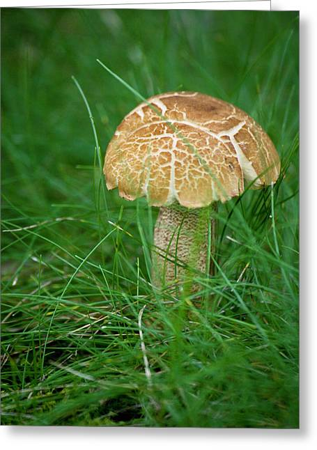Toad Stools Greeting Cards - Mushroom in the Grass Greeting Card by Teresa Mucha