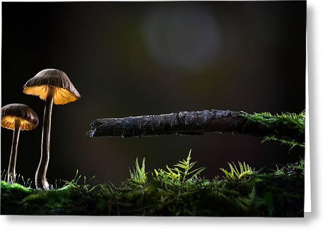 Mushroom Lights Greeting Card
