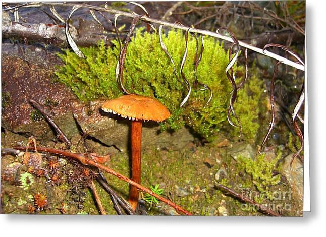 Mushroom Microcosm Greeting Card by Jim Thomson