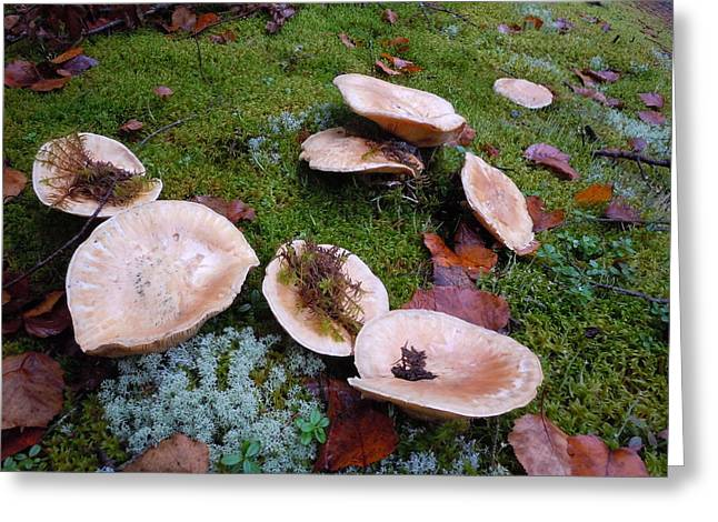 Greeting Card featuring the photograph Mushrooms And Moss by Francine Frank
