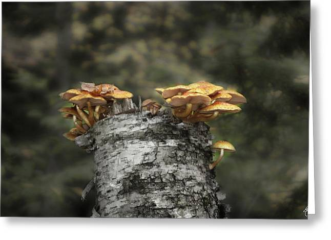 Mushrooms Atop Birch Greeting Card
