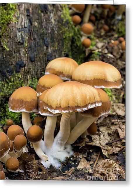 Mushrooms - D009959 Greeting Card