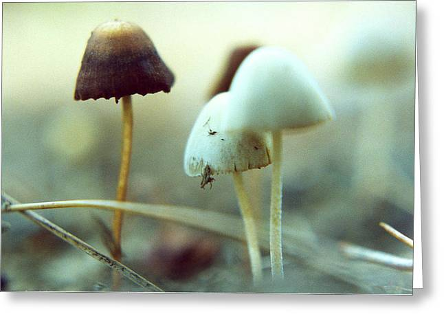 Mushrooms Greeting Card by Don Youngclaus