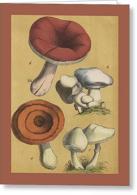 Mushrooms Vintage Drawing Greeting Card by German Botanical artist