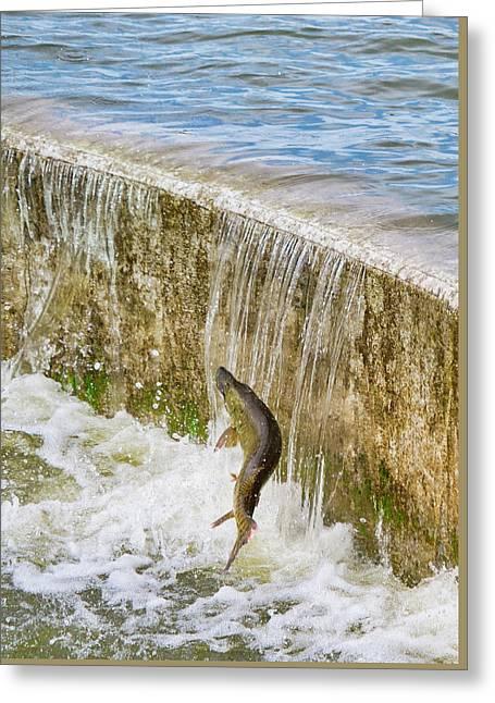 Muskie - Lake Wingra - Madison - Wisconsin Greeting Card by Steven Ralser