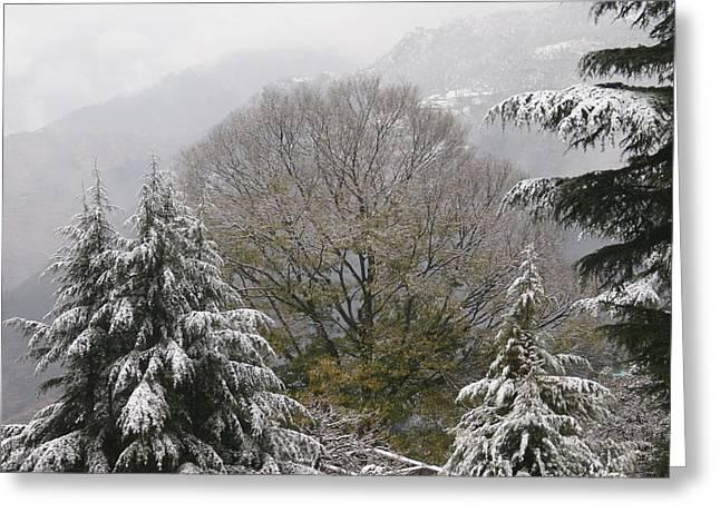 Mussoorie Winter 1 Greeting Card by Padamvir Singh