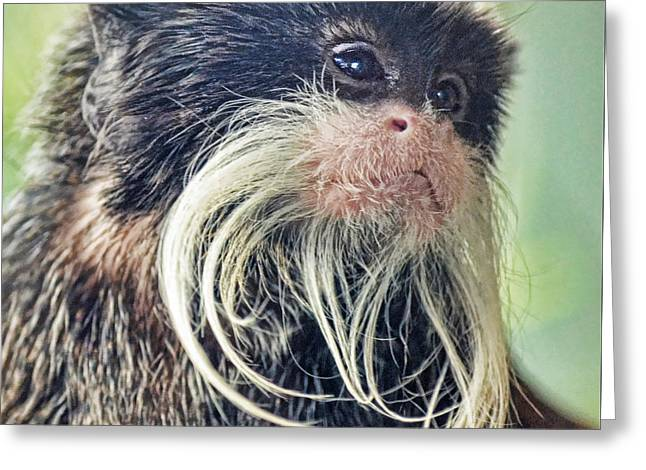 Mustache Monkey Watching His Friends At Play Greeting Card