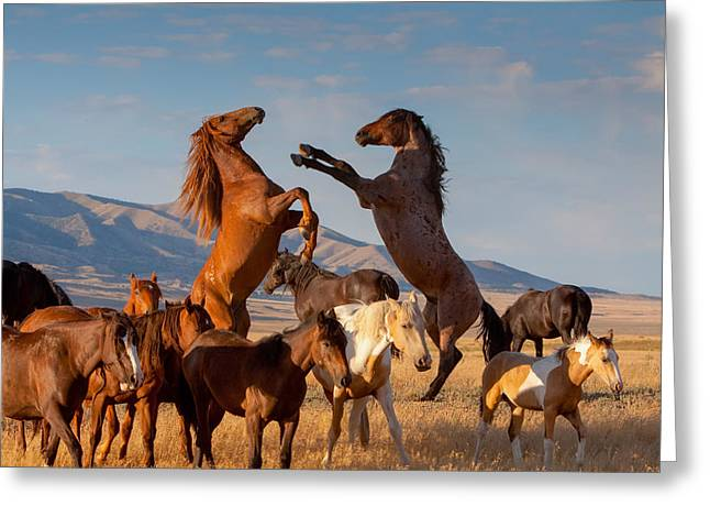 Mustang Clash Greeting Card