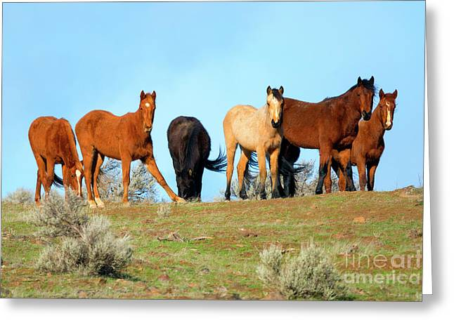 Mustang Herd Greeting Card by Mike Dawson