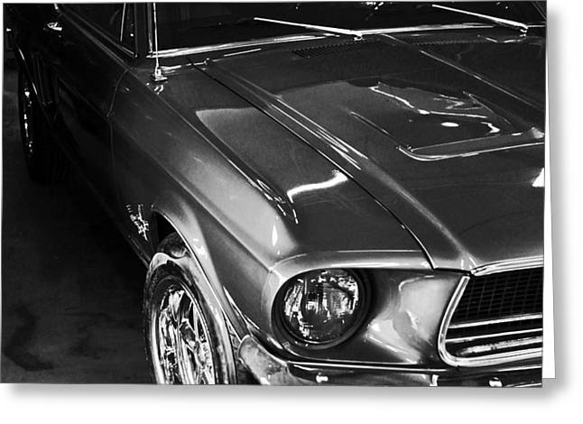 Mustang In Black And White Greeting Card