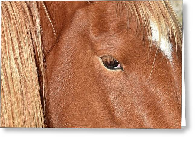Mustang Macro Greeting Card