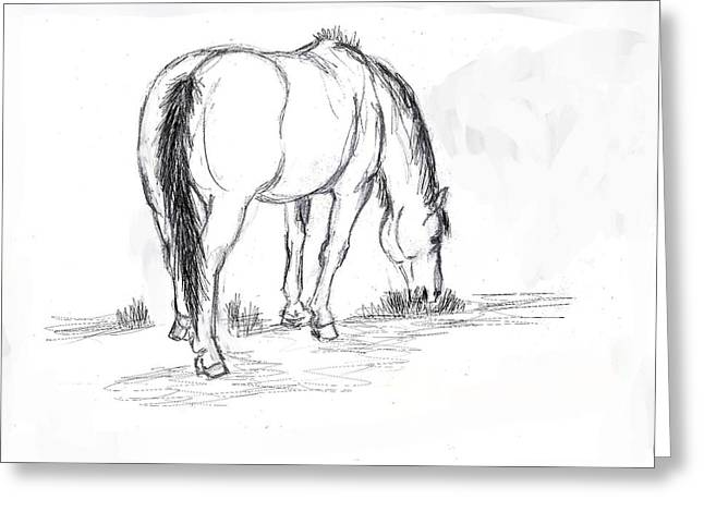 Mustang Mare Field Sketch Greeting Card by Dawn Senior-Trask