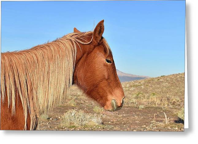 Mustang Mare Greeting Card