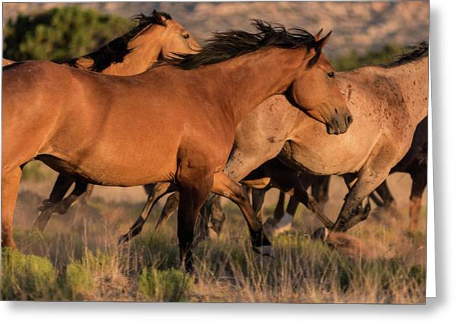 Mustang Run Greeting Card by Steve Gadomski