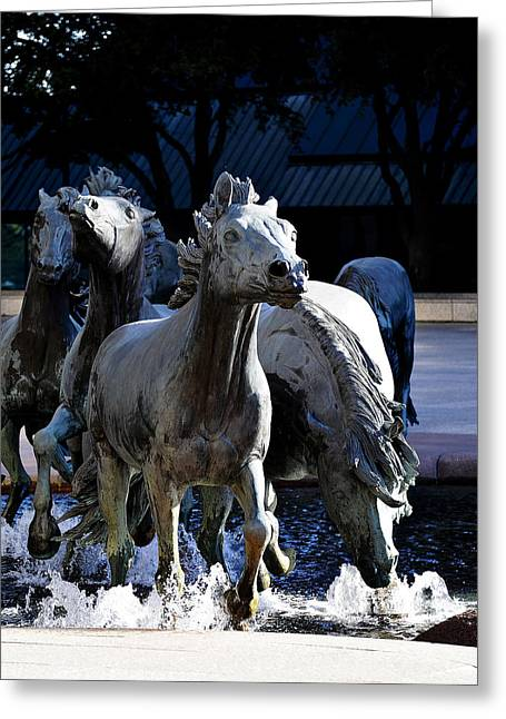 Mustangs  Greeting Card by Malania Hammer