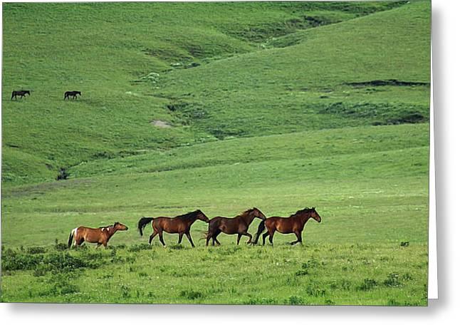 Mustangs Of The Flint Hills Greeting Card