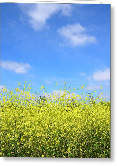 Mustard Beauty Greeting Card by Timothy OLeary