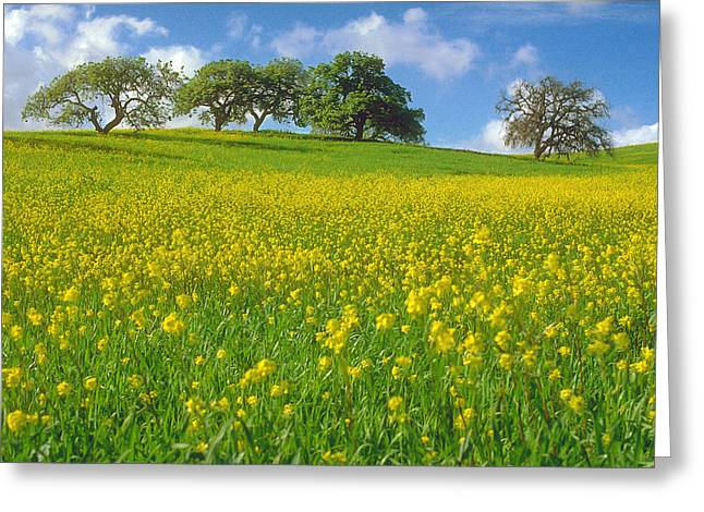 Greeting Card featuring the photograph Mustard Field by Mark Greenberg