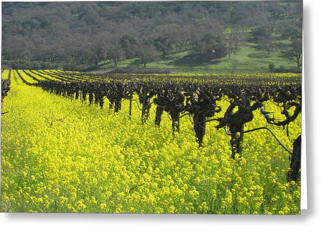 Greeting Card featuring the photograph Mustard Flowers by Kim Pascu