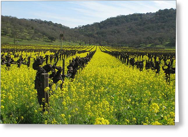 Mustard In The Vineyards Greeting Card