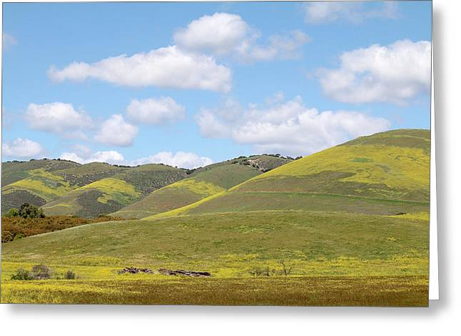 Mustard On Nipomo Hills Greeting Card