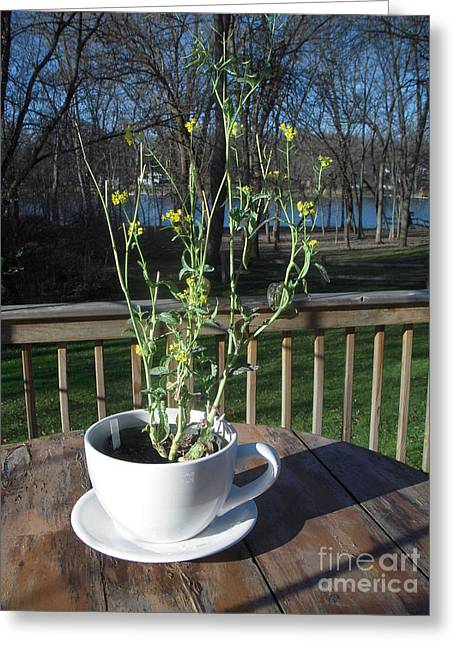 Mustard Seed Plant Cup Greeting Card by Deborah Finley