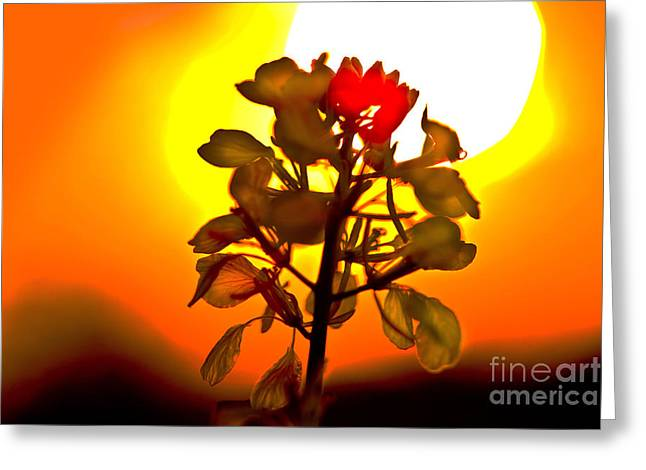 Mustard Sunset Greeting Card