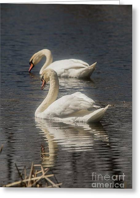 Greeting Card featuring the photograph Mute Swans by David Bearden