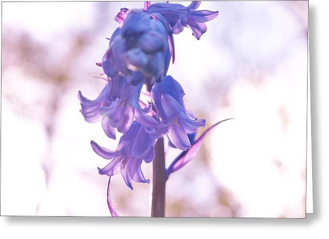 Muted Bluebell Greeting Card by Richard Brookes