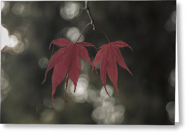 Muted Fall Colrs Greeting Card