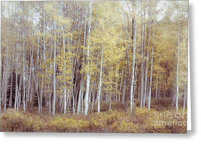 Muted Forest Greeting Card