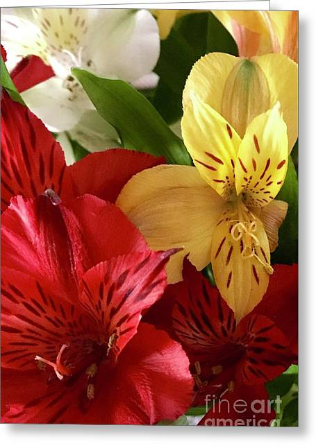 Muti Colored Lilies Greeting Card by CAC Graphics