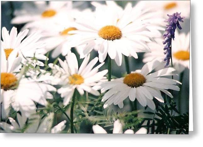 My Daisies Greeting Card by Jackie Mueller-Jones