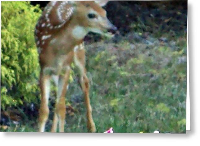 My Deer Friend...... Greeting Card