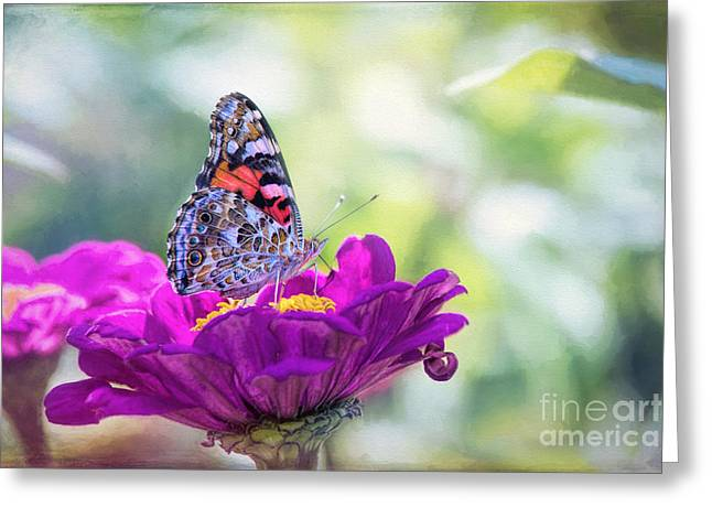 My Fair Painted Lady Greeting Card