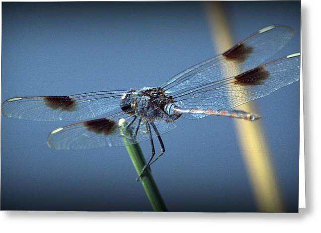 My Favorite Dragonfly Greeting Card