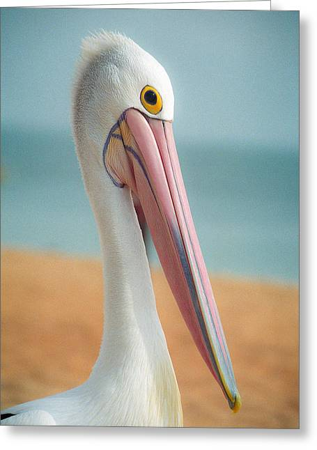 My Gentle And Majestic Pelican Friend Greeting Card