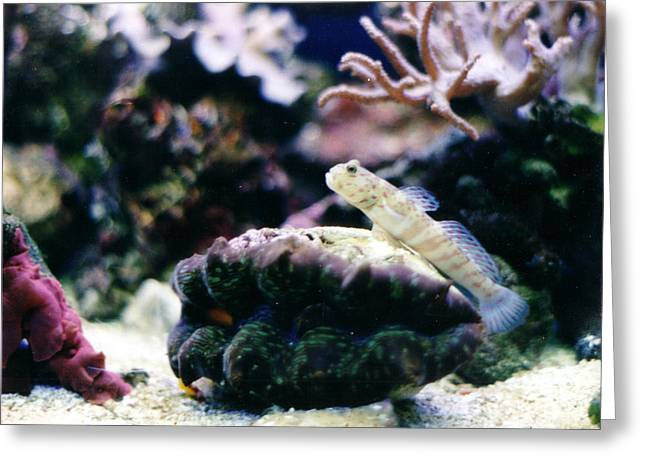 My Goby Friend Greeting Card by Steve  Heit
