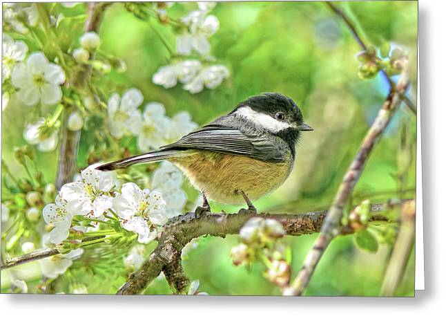 My Little Chickadee In The Cherry Tree Greeting Card