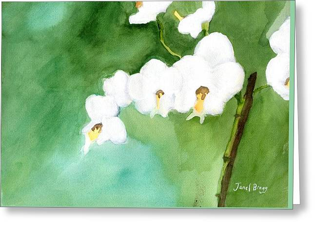 My Little Orchid In Green Greeting Card by Janel Bragg
