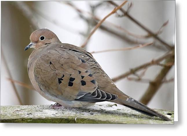 My Little Turtledove Greeting Card by  Andrea Lazar
