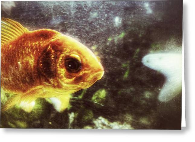 Greeting Card featuring the photograph My Littlest Fish by Isabella F Abbie Shores FRSA