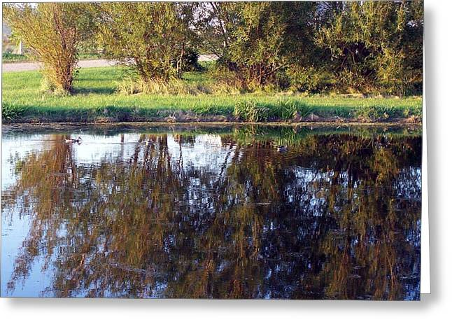 My Pond Greeting Card by Tracy Siebels