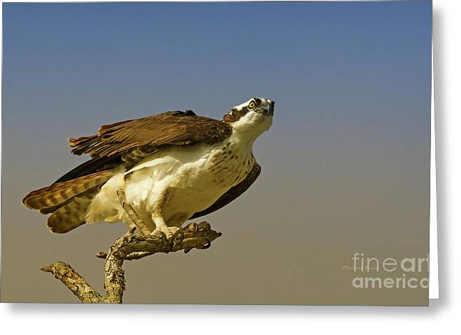 Greeting Card featuring the photograph My Pose For You by Deborah Benoit