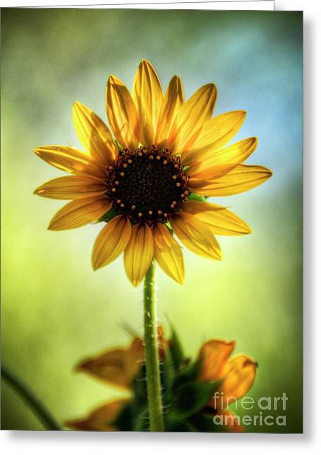 My Sunny Side  Greeting Card by Saija  Lehtonen
