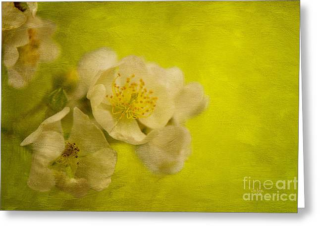 My Sweet Wild Rose Greeting Card by Lois Bryan