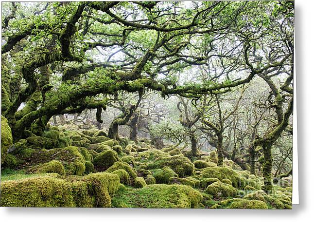 Mysterious Ancient Woodland Greeting Card by Tim Gainey