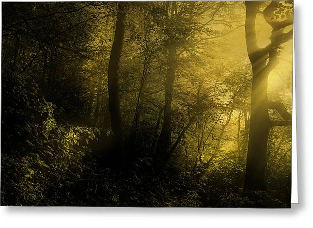 Mysterious Forest Greeting Card by Georgiana Romanovna